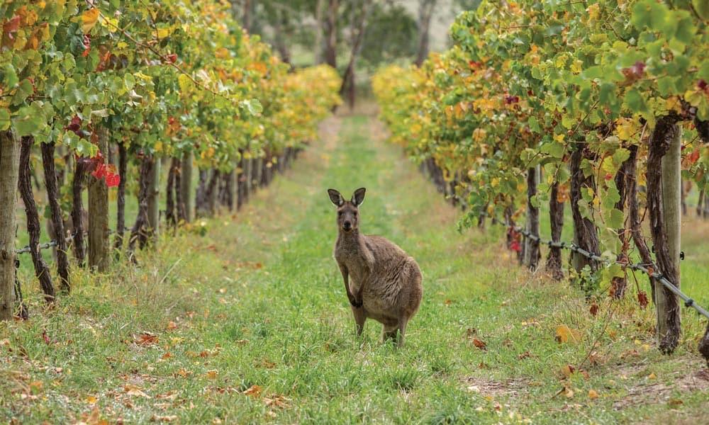 Wijnreis Australië - 1